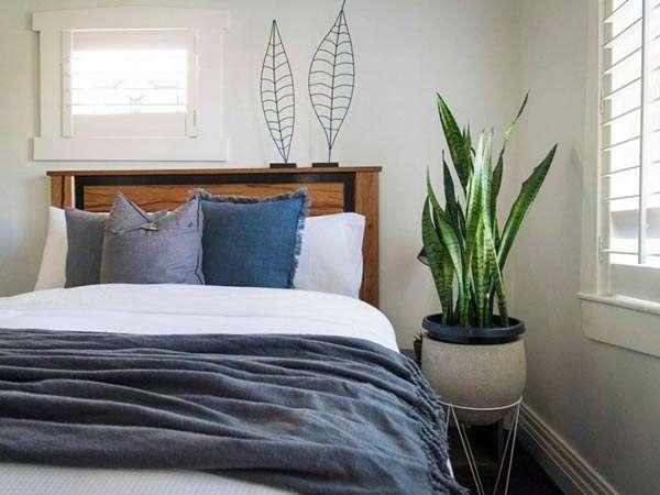 cây lưỡi hổ trong phòng ngủ