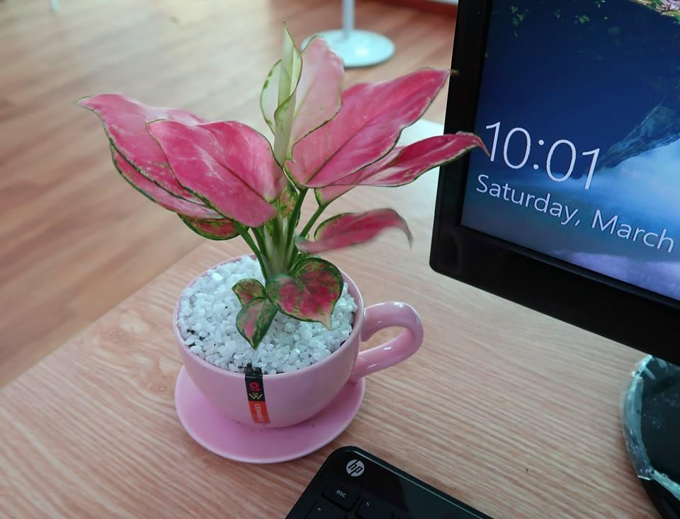 hoa tươi trang trí bàn làm việc
