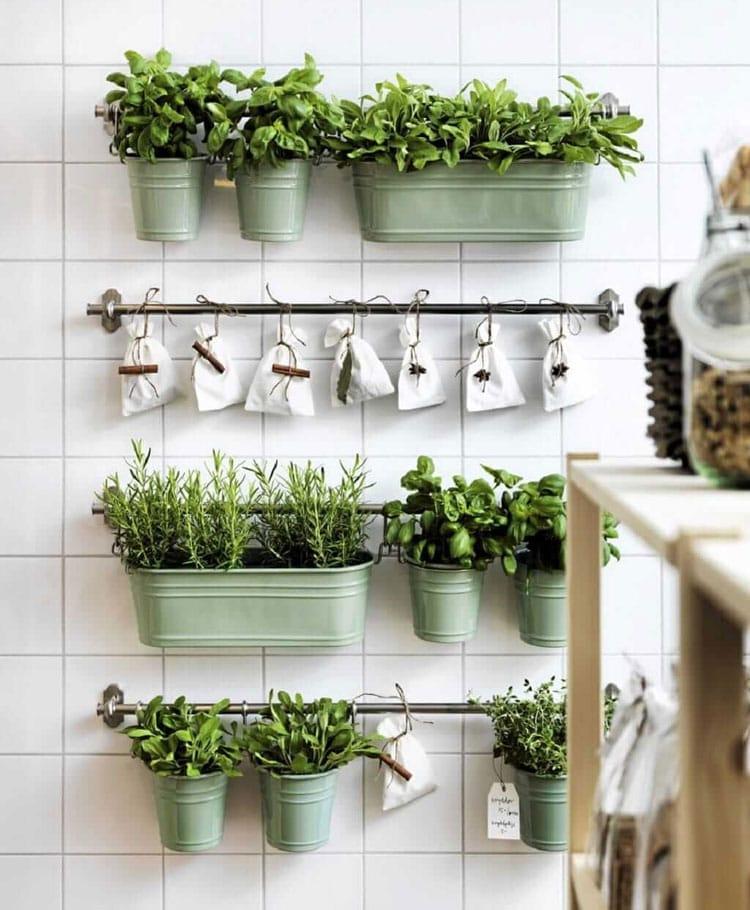 trồng cây xanh trong bếp nhỏ